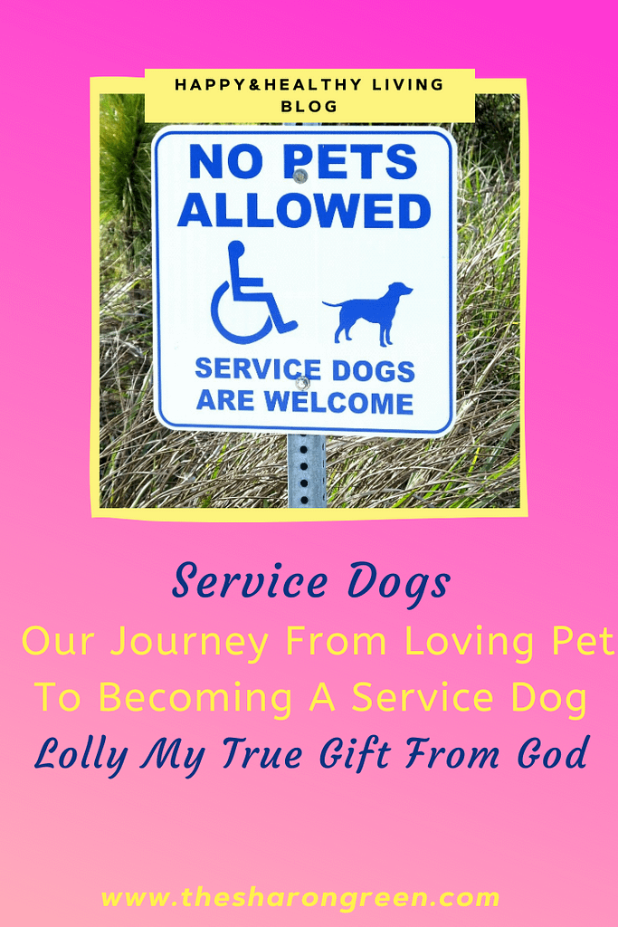 Follow our journey from pet to service dog! Lolly was given to me as a pup.  Little did we know that 8 months later she'd help save my life. #pets #servicedogs #CAD #coronaryarterydisease #heartattack #heartdisease #diabetes #Anxiety #mentalhealthblog #invisibleillnesses #chronicpain #IDA #anemia #fibromyalgia #lifestyleblogger #seo #newpost #blogging #amwriting #bloglovin #family #yolo