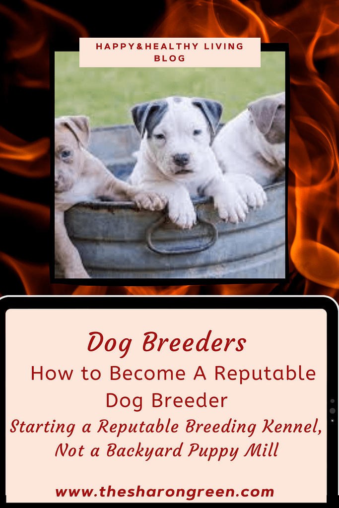 Have you ever wondered how to become a reputable dog breeder?  I have, many times over the years.  Learn more about dog breeders. #Dogs #pets #dogbreeder  #mentalhealthblog  #lifestyleblogger #seo #newpost #blogging #amwriting #bloglovin #family #yolo